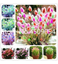 100 pcs Bonsai Heirloom Rabbit Tails Grass Seedsplants Colorful Fescue Very Beautiful Ornamental Grasses Herbs High Germination